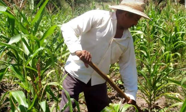Сундук возрастом 1000 лет: лопата фермера случайно попала в клад