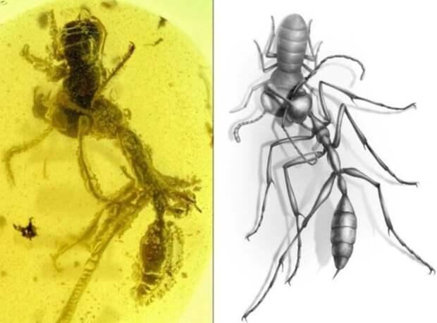Интересное об «адских пауках»