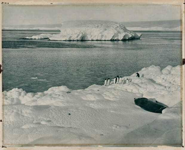Первая Австралийская антарктическая экспедиция в фотографиях Фрэнка Хёрли 1911-1914 25