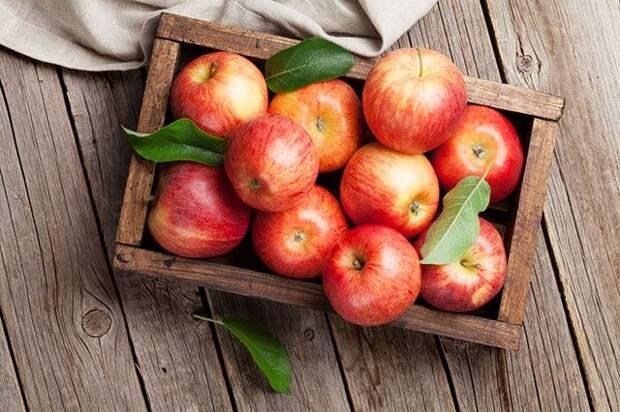 Освежающий яблочный напиток. Как приготовить домашний сидр?
