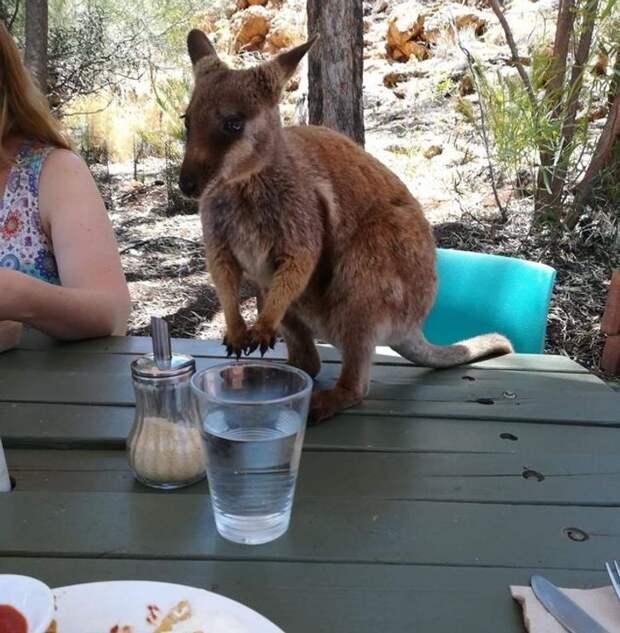 18 причин любить Австралию, правда лучше издалека