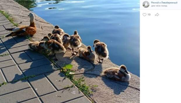 Фото дня: новое поколение огарей в парке Дружбы