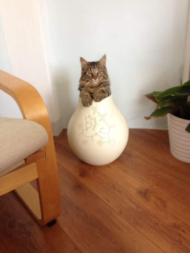 Он думает, что он - цветы. Этот кот также случайно забрел в гости встреча, гости, дружба, животные, коты, кошки, неожиданно, фото