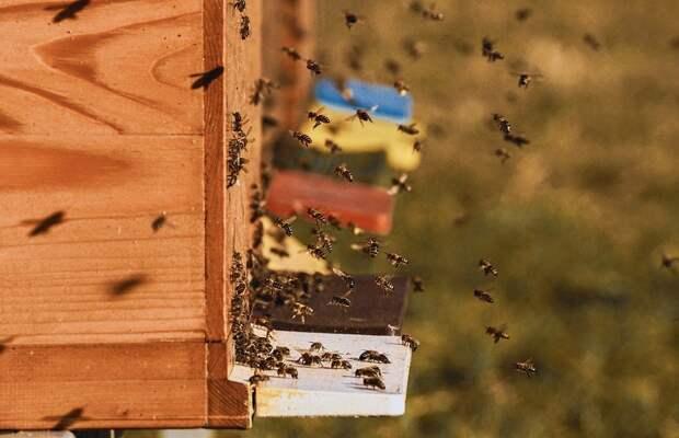 Пчелосемьи, Пчелы, Улей, Пчеловод, Медоносных Пчел