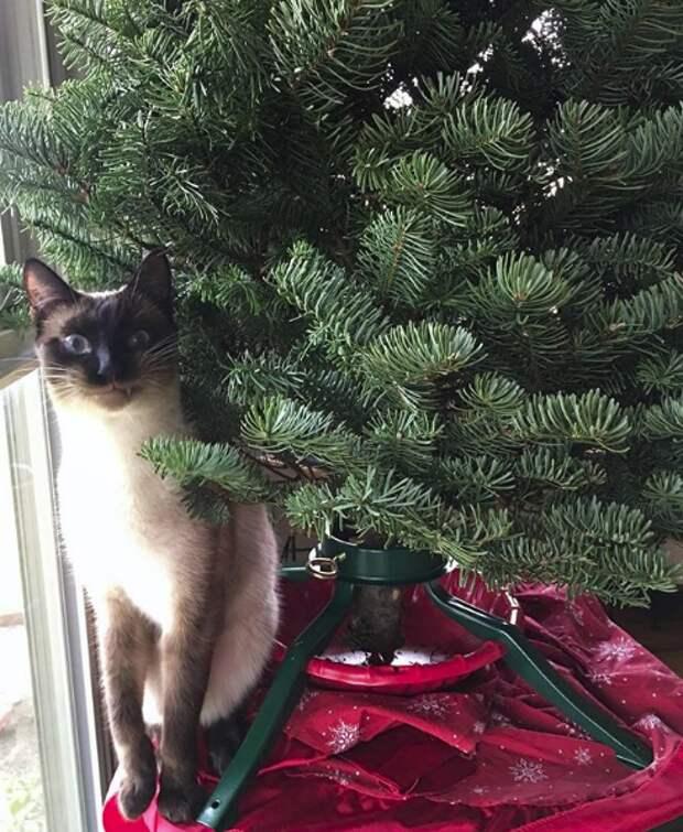 «Валерьянкой намазано?!» Она не любила котов, но они всё продолжали появляться у её двери