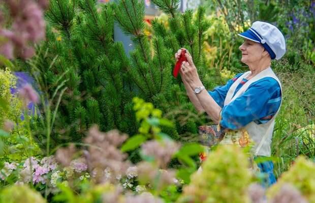 Фестиваль «Цветочный джем» пройдет в Митине