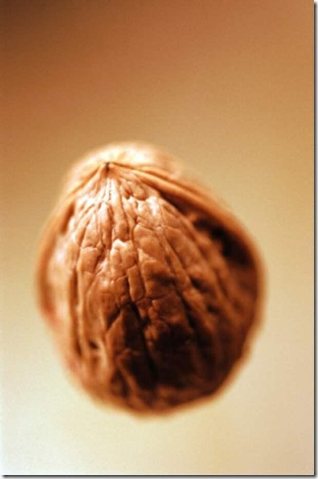 wlnut