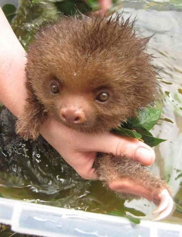 Вид этих купающихся животных, гарантировано вызовет на лице улыбку