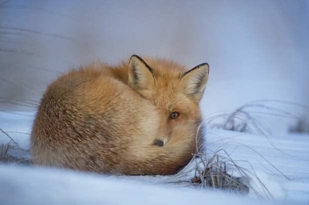 В выходные в Удмуртии начнёт холодать