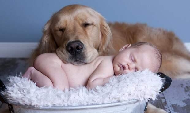 Собака и малыш