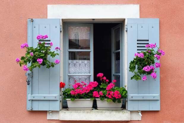 Живые цветы - украшение любого окна