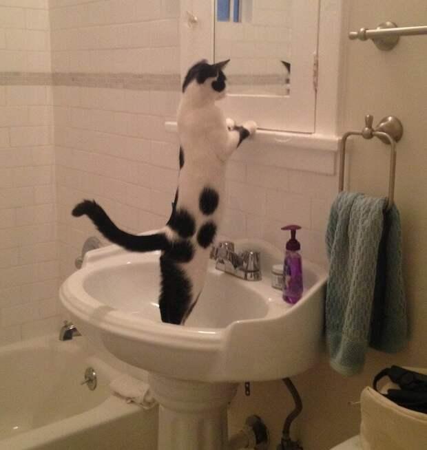 14 веселых фото котов, в чьих поступках нет никакой логики!