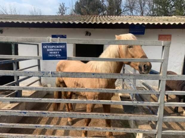 Врач рассказал о состоянии пятилетней девочки, которой лошадь откусила палец в зооуголке Симферополя