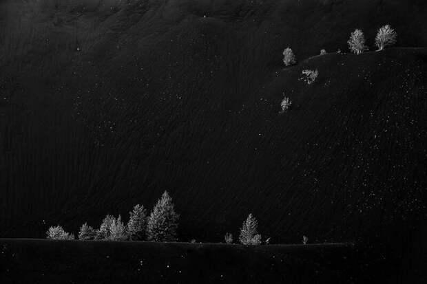 Победитель в категории «Природа в чёрно-белых тонах» national geographic, в мире, животные, красота, природа, россия, фото