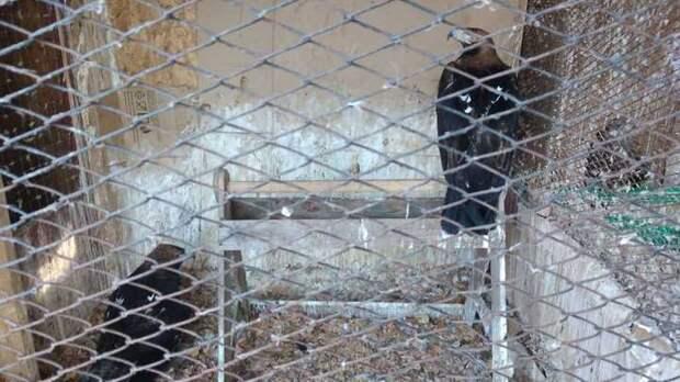 В Тольятти благодаря депутату Туркову решена проблема приюта для птиц