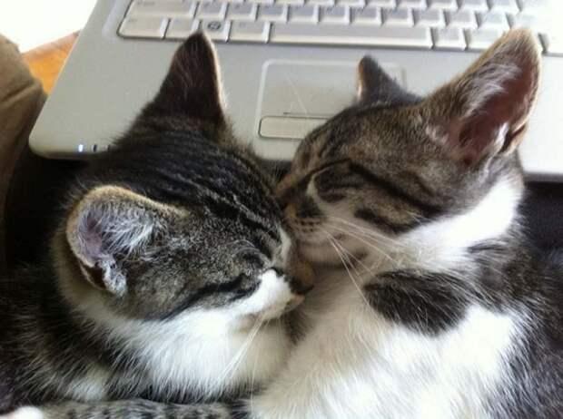 Учимся нежности у кошек (25 фото)
