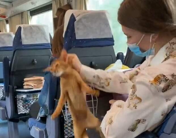 «Брала за шкирку и хватала за горло»:пассажирка Стрижа едва не вытрясла душу из кота