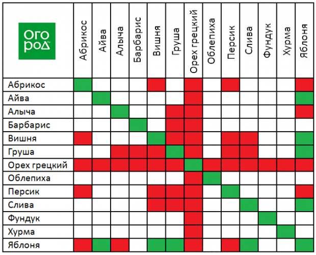 Таблица совместимости плодовых деревьев