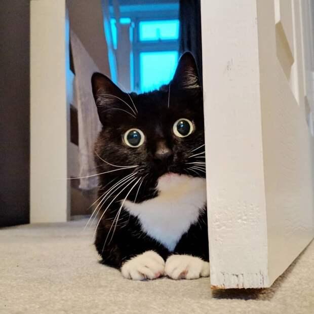 7. Кошка Зельда, которая выглядит удивленной всегда животные, коты, кошки, милота, питомцы, фото