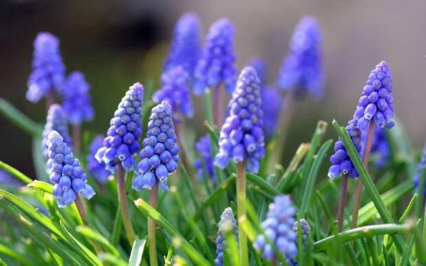 А весна во дворе!