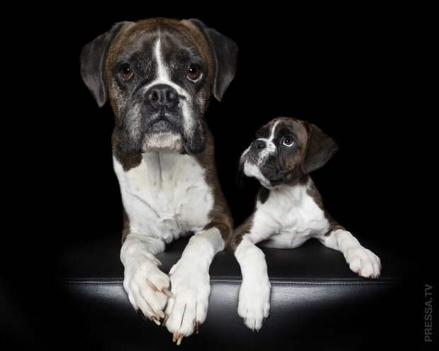 Сравнительные фотографии собак: маленькие и большие