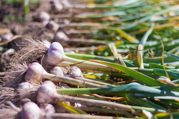 На всю зиму: как хранить в квартире картошку и другие овощи