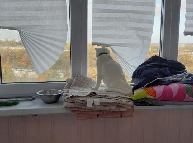 Курортный кот рисковал быть брошенным на виноградниках. Но, к счастью, его спасли отдыхающие, теперь у кота московская прописка.
