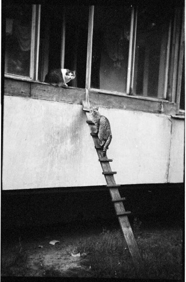Очаровательные котики