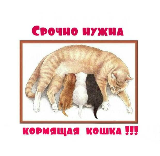 Уважаемые петербуржцы, помогите, пожалуйста!