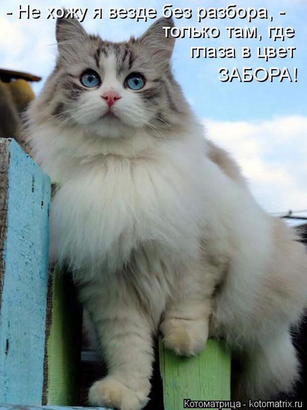 kotomatritsa_D (1) (525x700, 220Kb)