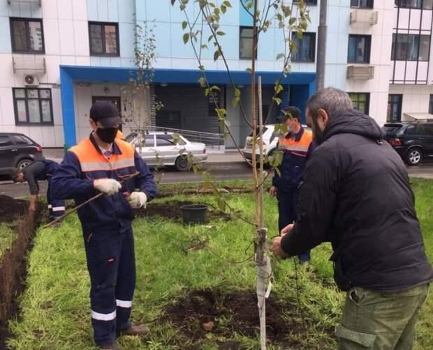 Озеленение по просьбе жителей: посадки пройдут на Дмитровском и 9-й Северной линии
