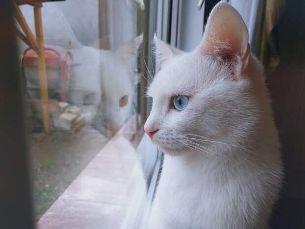 Если за окном по двору будут гулять другие кошки – это станет раздражителем. Питомец может стать агрессивным и даже начать нападать на хозяев.