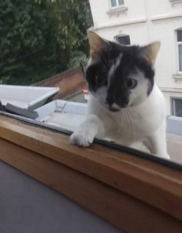 Мужчина придумал игру в прятки, чтобы сманивать свою любопытную кошку с крыши