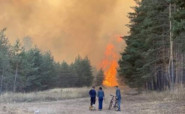 Лес пилят – откаты летят: Леса России исчезают при попустительстве государства