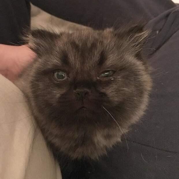 В лесу Аризоны нашли необычного котенка-карлика