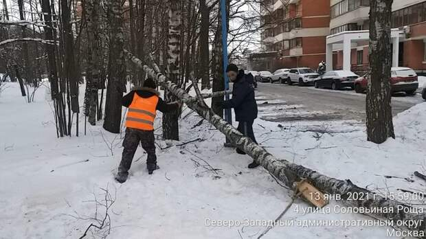 От упавшего в Куркине дерева никто не пострадал