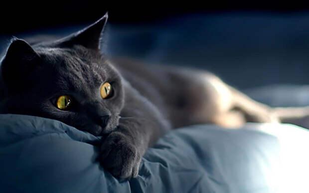 Кошмарный сон кота