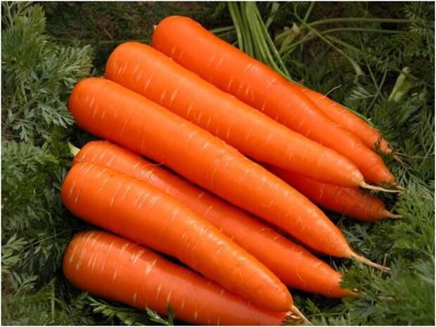 Секреты выращивания крупной моркови