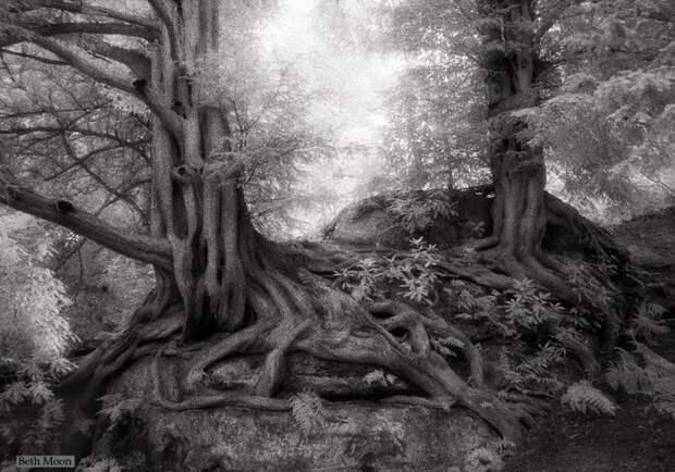 Красивые фотографии самых старых и величественных деревьев в мире