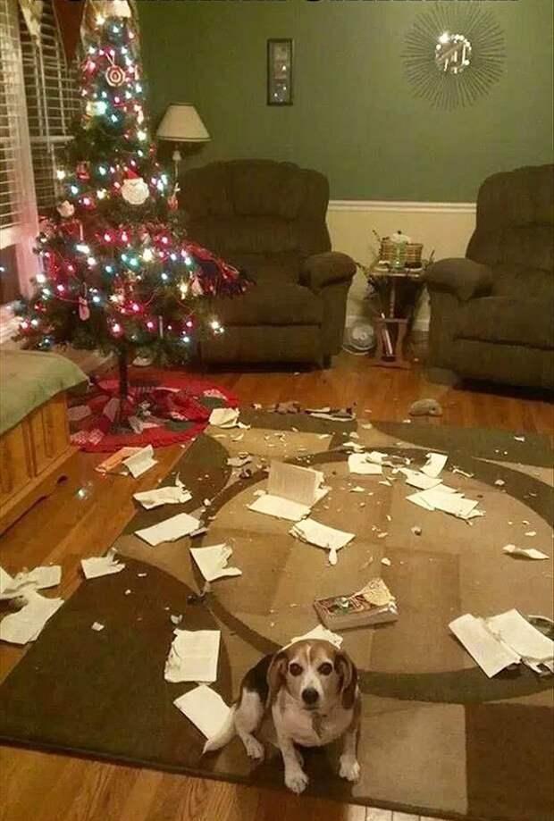 """6. """"Это не я, клянусь!"""" животные, новый год, праздник к нам приходит, разрушительная сила, рождество, собаки и кошки, юмор"""