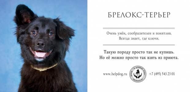 Приюту для животных сделали человечную рекламу