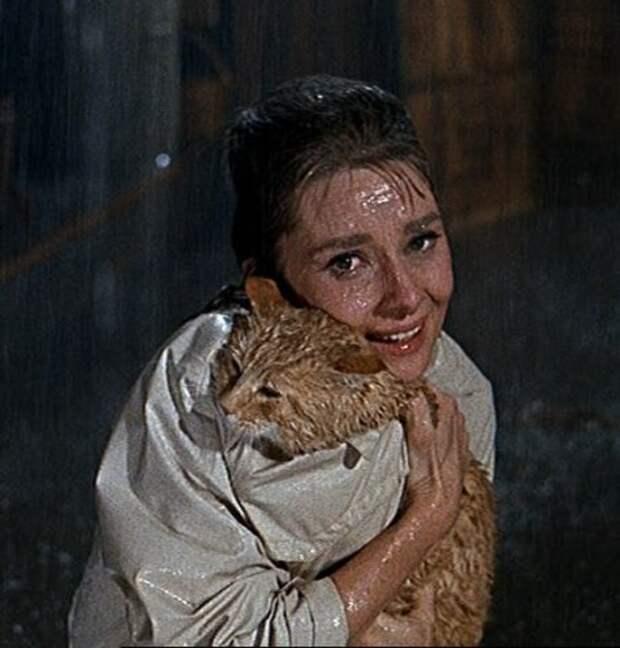 Одри Хепберн и Кот. Фото / Audrey Hepburn and Cat Rhubarb. Photo