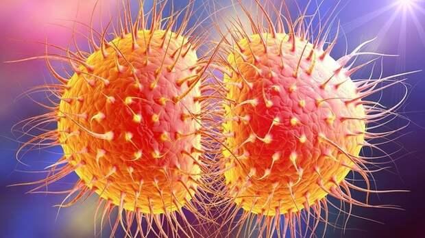 Гонорея у женщин: симптомы, лечение, проявление, инкубационный период -  причины, диагностика и лечение