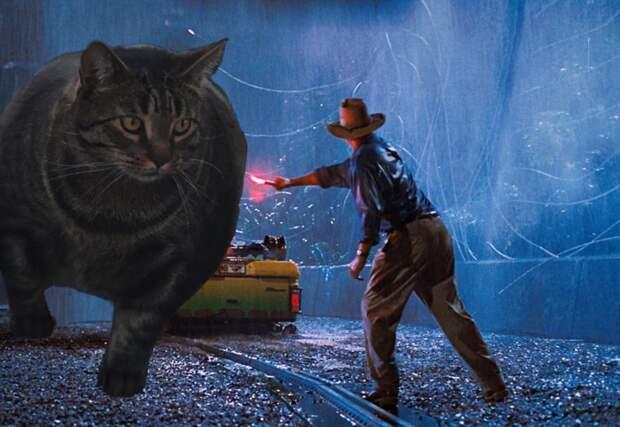 Мускулистый кот удивил и напугал людей