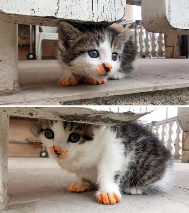 Котяшки-замарашки, которым неведомы правила приличия за столом