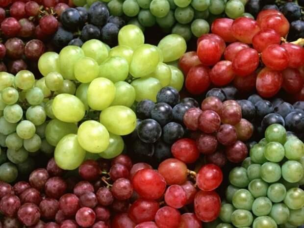16 лучших сортов винограда для Подмосковья и средней полосы