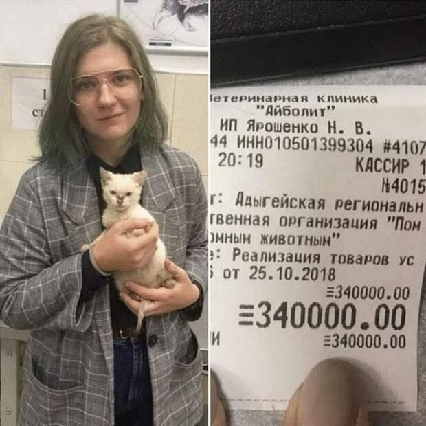 Чтобы отдать в приют котёнка, студентка из Адыгеи оплатила долг этого заведения в 340 тысяч