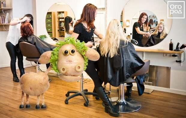 Коллаж - овечка в парикмахерской