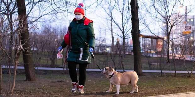Волонтеры Москвы ежедневно выгуливают 120 собак московских пенсионеров. Фото: mos.ru