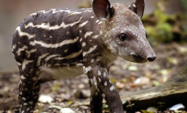 10 известных животных, которых в детстве никто не узнает